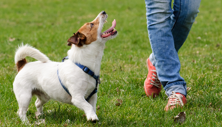 Residential Training for Dogs 1