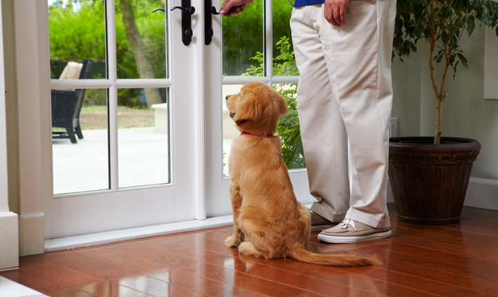 House Rules for Puppies2