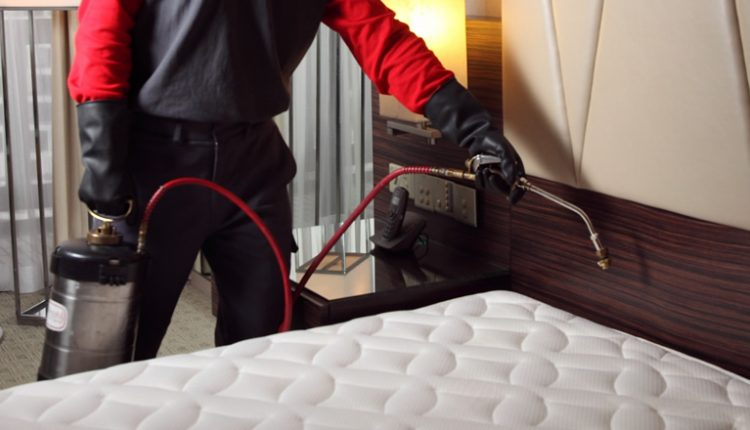 Extermination Of Bed Bugs