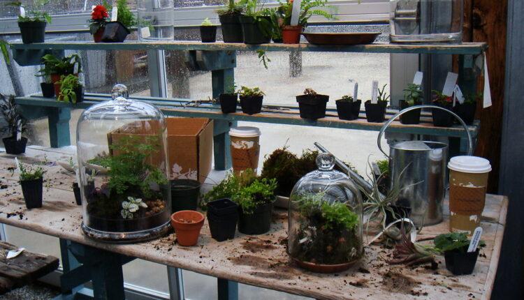 Terrarium Workshop Plant