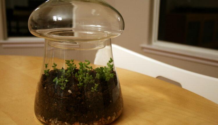 terrarium as a home décor
